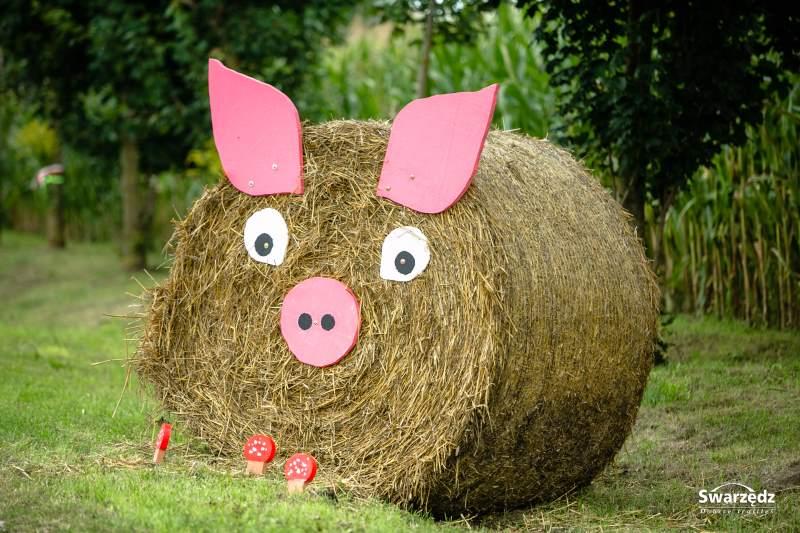 Dożynki świnka